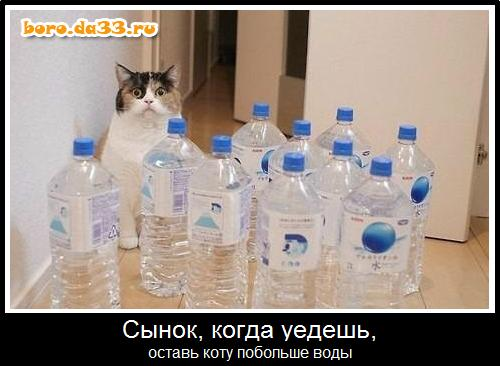 оставь коту воды побольше фото
