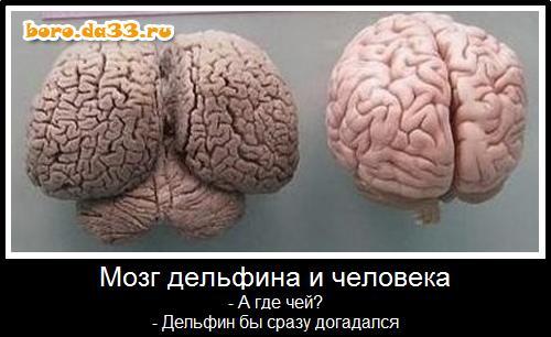 boro.da33.ru/upload/users/1/12615_boro.da33.ru.jpg