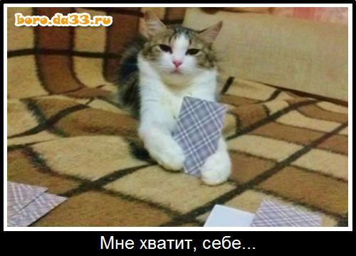 Играть в кота в карты