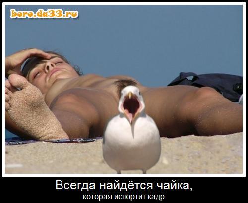 12980_boro.da33.ru.jpg