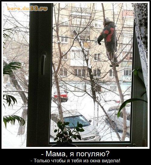 - Мама, я погуляю? - Только чтобы я тебя из окна видела!